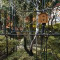 写真:弘川寺のカイドウ