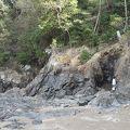写真:鳥羽竜化石発見現場