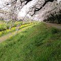 写真:佐奈川堤