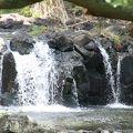 写真:リリウオカラニ植物園