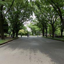 地域住民の憩いの場、駒沢オリンピック公園