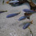 写真:マニラ水族館