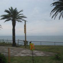 ヤシの木に海、南国です。