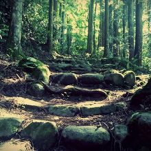リフトに乗って5分、山道を散策して15分で城跡につきます。