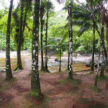【美しい小道】と呼ばれるジョインビレのお伽の田舎(ジョインビレ/ブラジル)