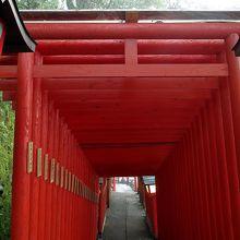 表参道の赤い鳥居が並ぶ姿です。