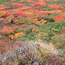 足下に広がる紅葉の美しさに、釘付けになりました。