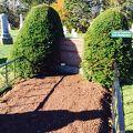写真:モンゴメリの墓 (共同墓地)