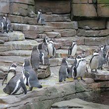 ハーゲンベック動物園 クチコミ...