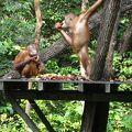 写真:ラサリアオランウータン保護区