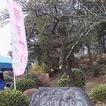 写真:辻村植物公園