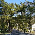 写真:吉備津の松並木