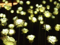 東大門デザインプラザ LEDバラ庭園