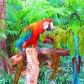 写真:ジャングル アイランド