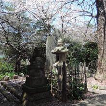 散りかけの桜と灯籠や狛犬像がマッチしてきれいだった