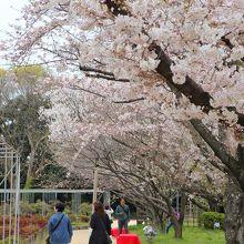 牡丹芍薬園