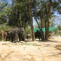 写真:Taweechai Elephant Camp