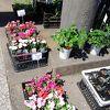 春を感じる花の市