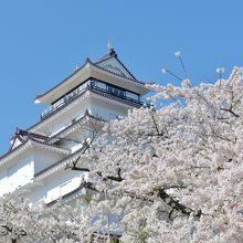 天守閣と桜