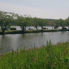 手前は桜川、奥が千波湖