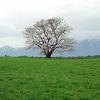 岩手山と桜の木