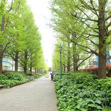 中央区としては珍しい緑の並木