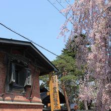 レンガ造蔵と桜