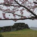 写真:八幡山古墳