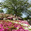 ツツジの季節は素晴らしい公園