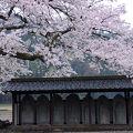 写真:西山光照寺跡