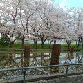 写真:旧相模川橋脚