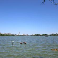 千波湖と奥の街並み