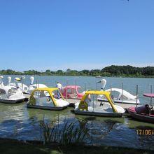 千波湖とボート
