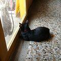 写真:猫門 カフェ モーメント