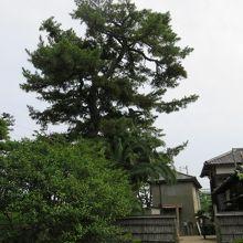 よく手入れされている庭園や樹木