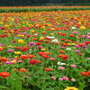 いろいろなお花を見ることができます