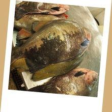 マナウスの最大の見どころのひとつ市営市場(魚売り場の方)(マナウス/アマゾナス州/ブラジル)