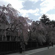 枝垂桜は必見