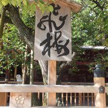 天満宮のご本殿に向かって右側にある、菅原道真公の歌にも因む梅です。