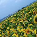 写真:朝日ケ丘展望台