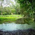 写真:宇佐神宮 菱形池