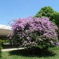写真:イビラプエラ公園