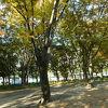 名古屋市内でも大きな公園