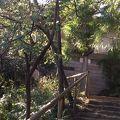 写真:松風閣展望台