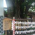 写真:櫛田神社 夫婦銀杏