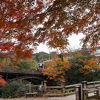 紅葉の猿橋
