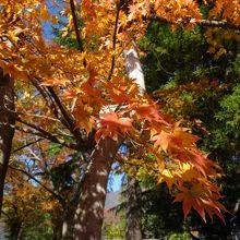 秋の松本城のお壕横