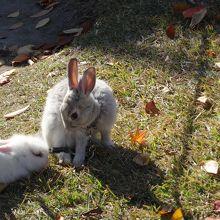 公園にはウサギさん