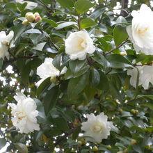 名前は分からないのですが咲いていた白い花です