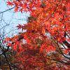 散歩にぴったり、紅葉が見ごろでした